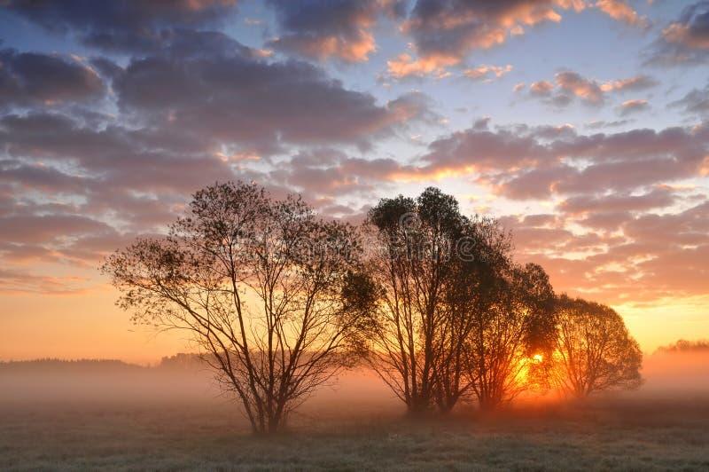 Zonsopgang tussen bomen op een nevelige weide royalty-vrije stock foto