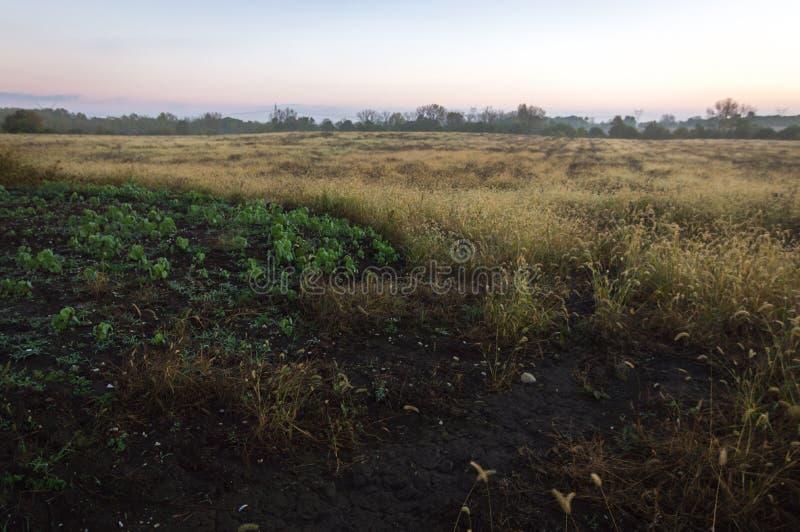 Zonsopgang van de de Prairiereserve van Midewin de Nationale Tallgrass stock afbeelding