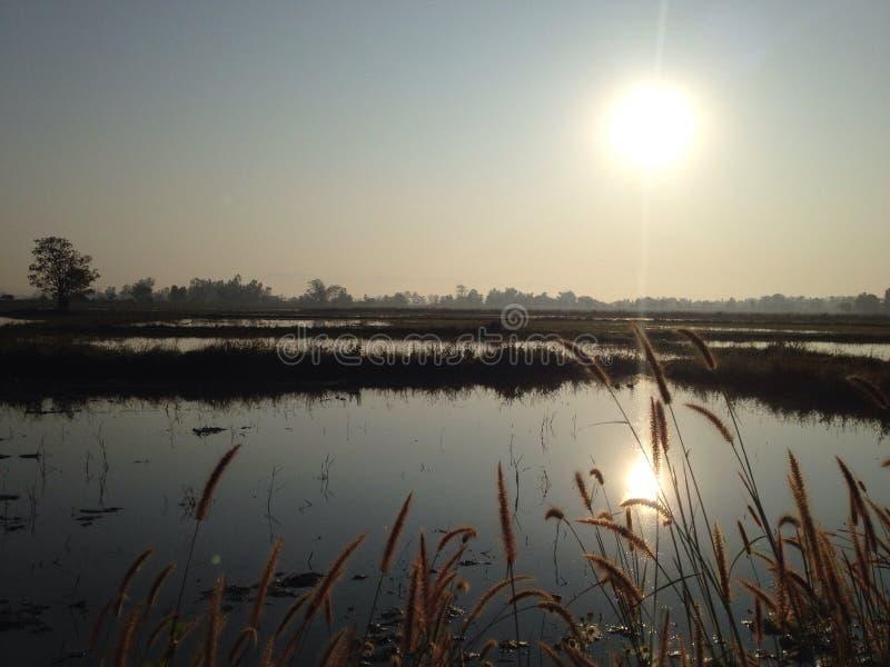 Zonsopgang van het padieveld royalty-vrije stock afbeelding