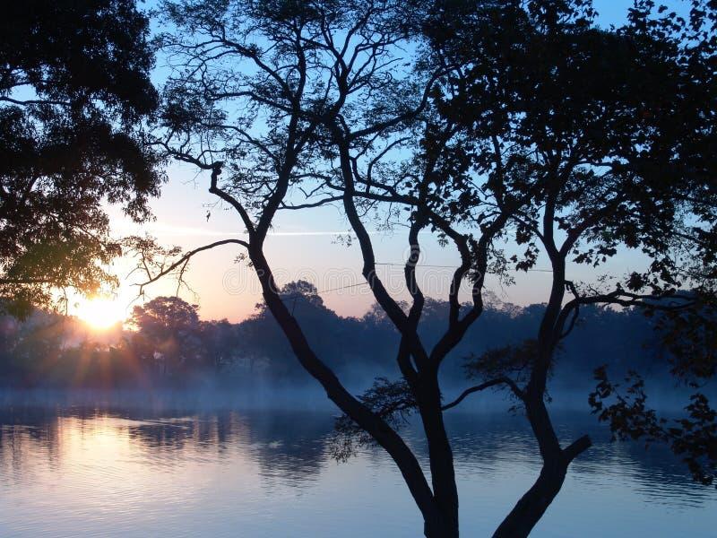 Zonsopgang vroege ochtend stock foto