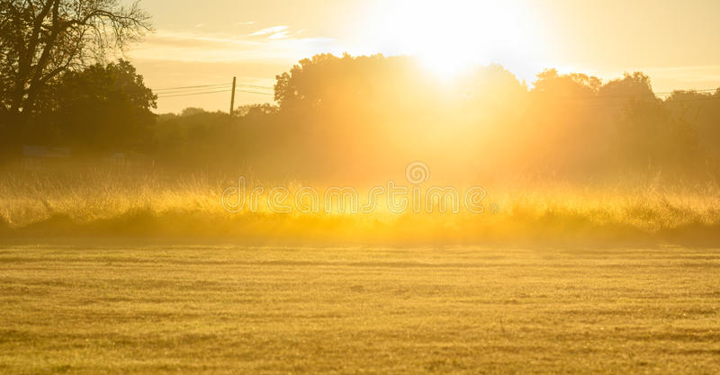 Zonsopganggebied met lange grassen royalty-vrije stock foto's