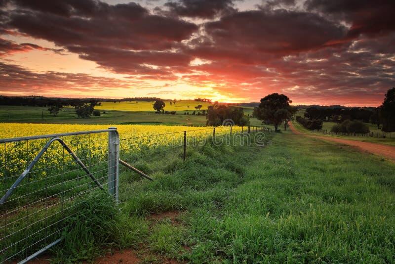 Zonsopganglandbouwgronden Australië stock foto's