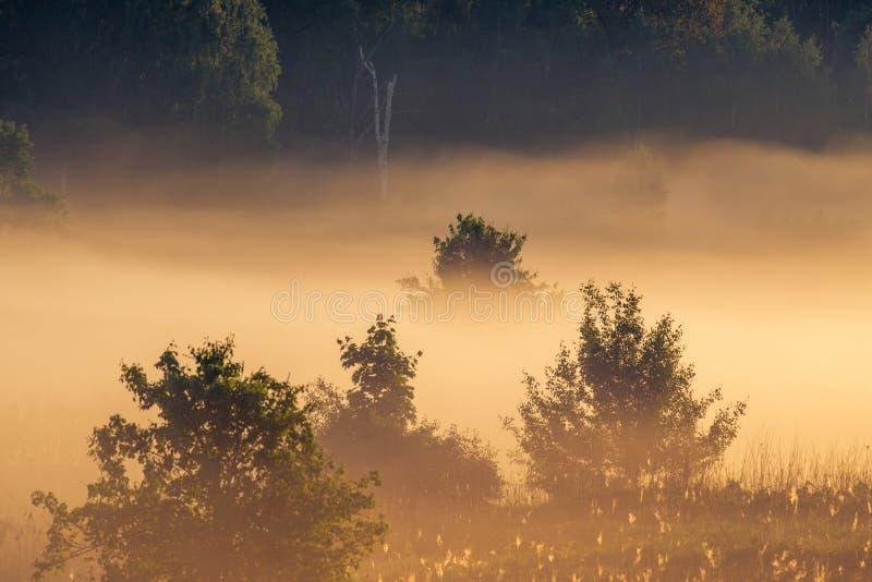 Zonsopganglandschap van bomen in nevelige ochtend stock afbeelding