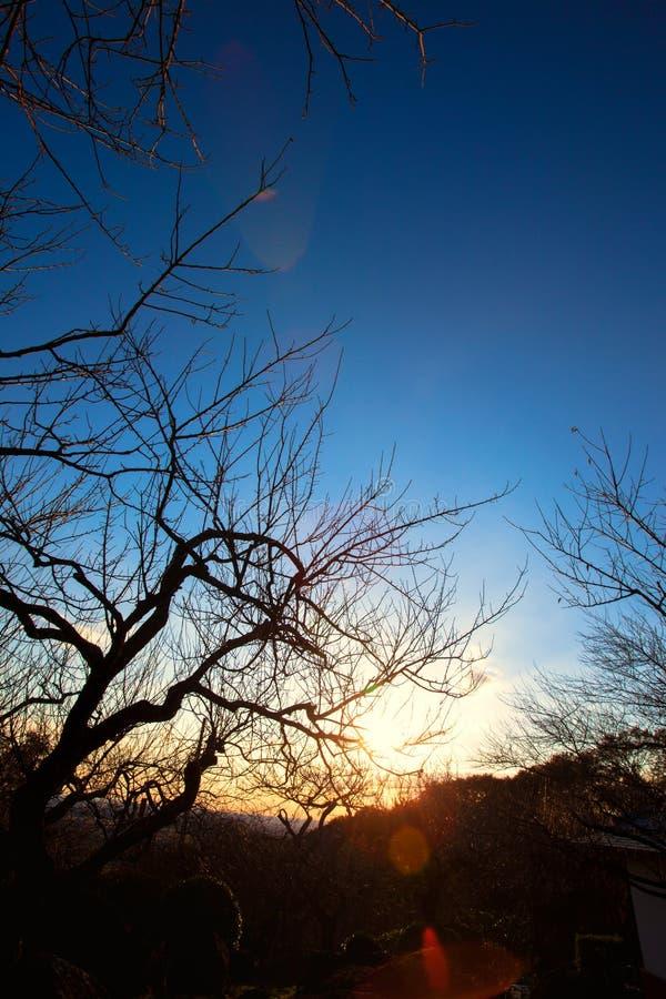Zonsopganglicht tussen de takken bij de lente royalty-vrije stock fotografie