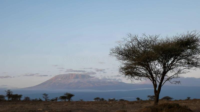 Zonsopgangmening van MT-kilimanjaro en een acaciaboom bij amboseli in Kenia royalty-vrije stock foto's