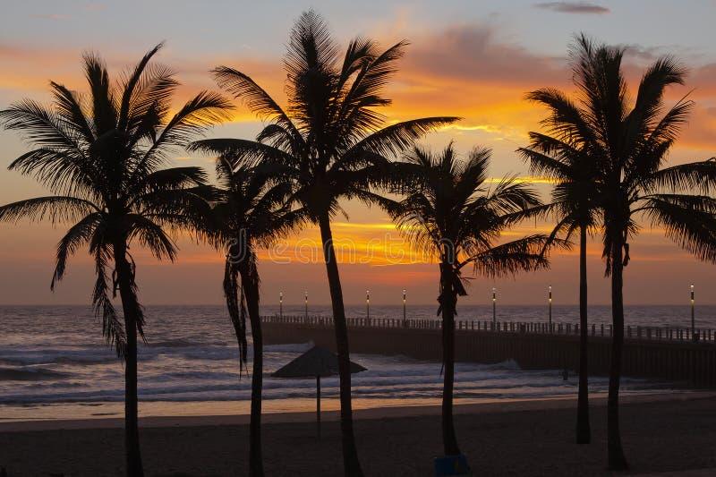 Zonsopgangsilhouet in Durban, Zuid-Afrika stock afbeelding