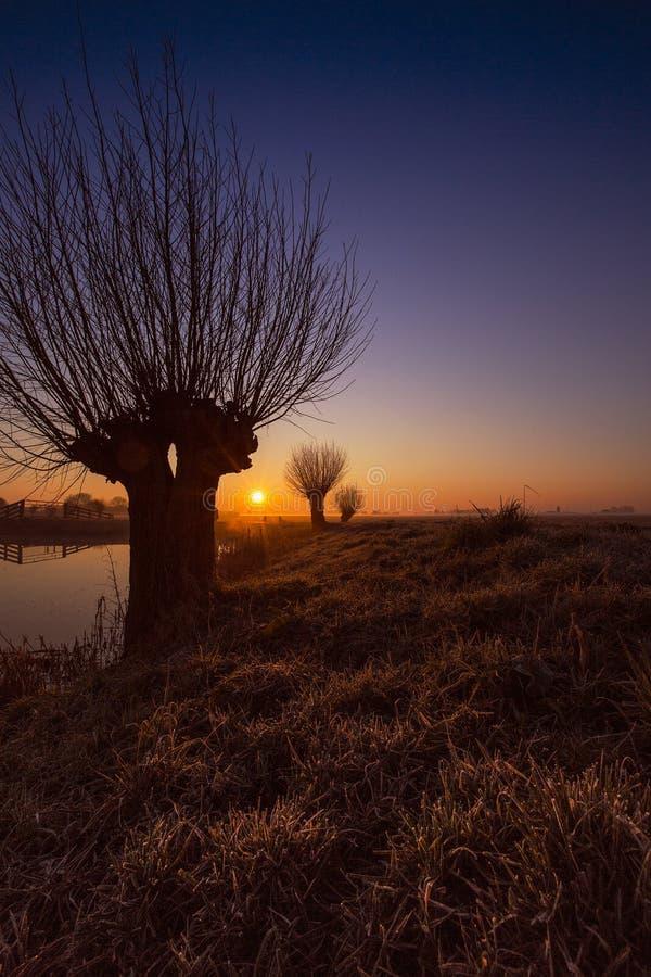 Zonsopkomst de bij de Knotwilgen, saules au lever de soleil photo stock