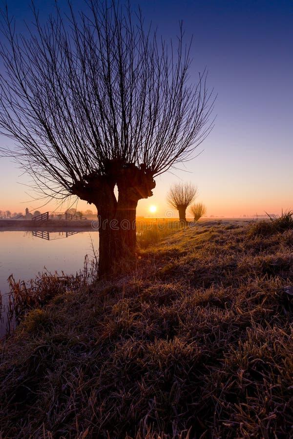 Zonsopkomst de bij de Knotwilgen, saules au lever de soleil images stock
