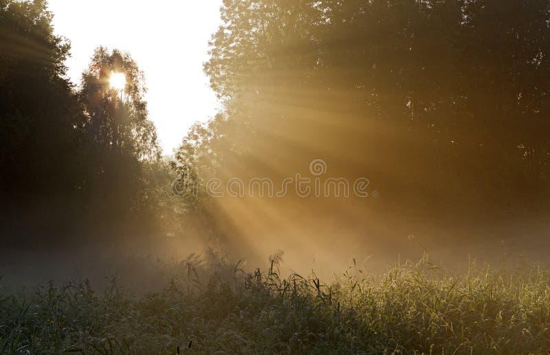 Zonsopkomst del bij de Pampushout Almere, Pampushout durante salida del sol imágenes de archivo libres de regalías