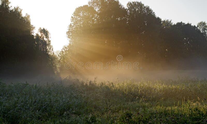 Zonsopkomst del bij de Pampushout Almere, Pampushout durante salida del sol fotografía de archivo libre de regalías