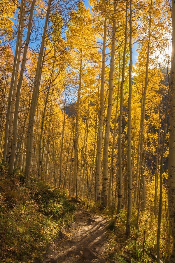 Zonster en Aspen Trees op de Sleep van Colorado stock afbeeldingen