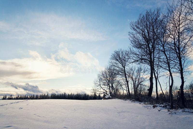 Zonstralen die door bomen in mooi sneeuw zonnig de winterlandschap overgaan, bevriezende weervoorspelling royalty-vrije stock foto's