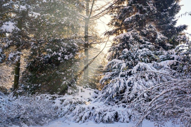 Zonstralen in een sneeuwpark royalty-vrije stock foto