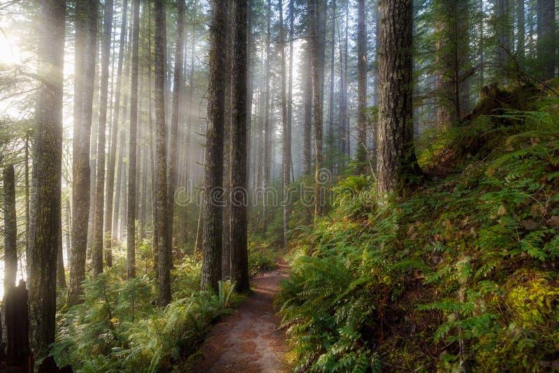 Zonstralen langs Wandelingssleep in Washington State Park royalty-vrije stock fotografie