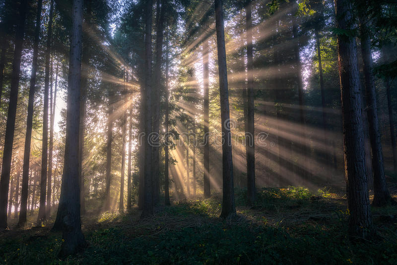 Zonstralen op bos stock fotografie
