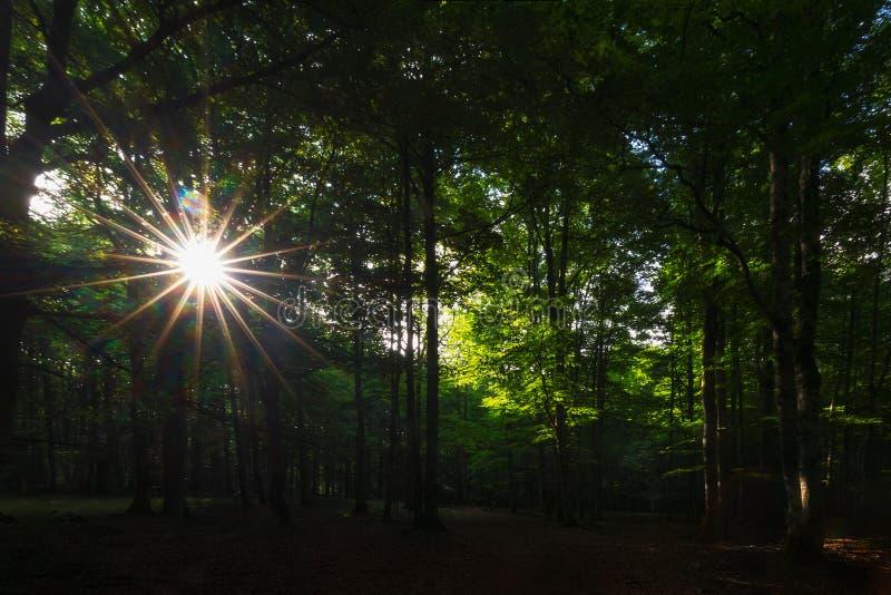 Zonstralen tussen de bomen in Urbasa-bos royalty-vrije stock afbeelding