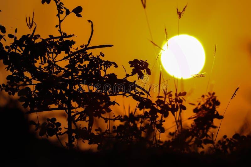 Zonverf de hemel met sinaasappel royalty-vrije stock foto's