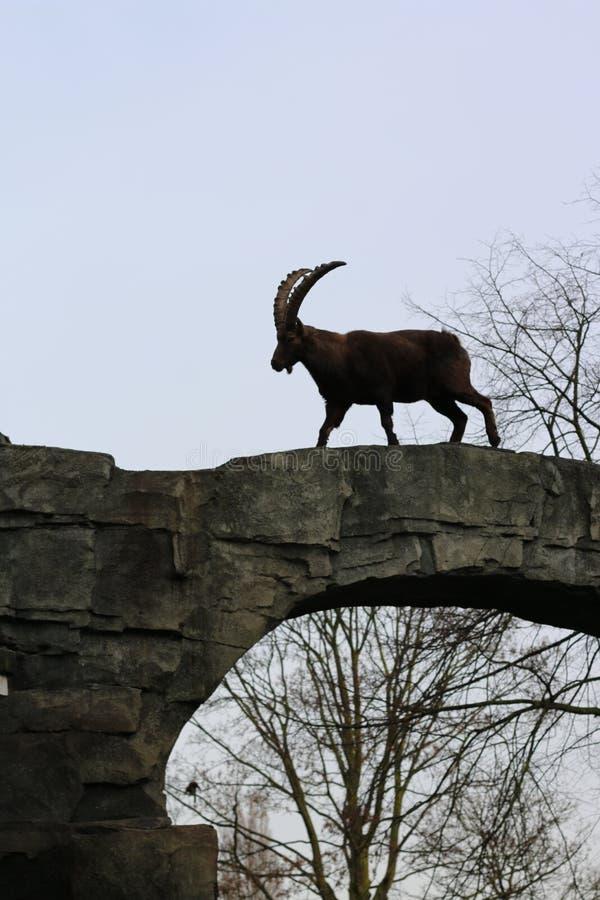 Zoo 1 image stock
