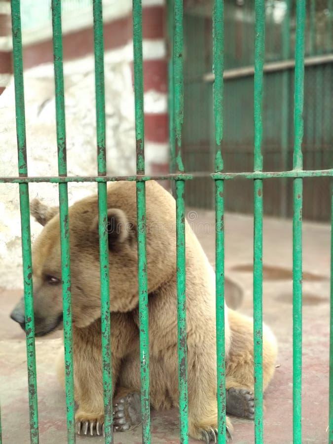 zoo foto de archivo