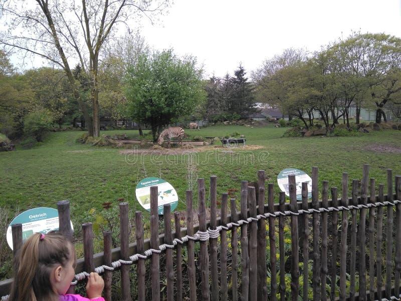 zoo arkivfoto
