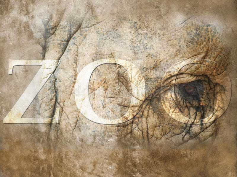 Zoo stockfotos