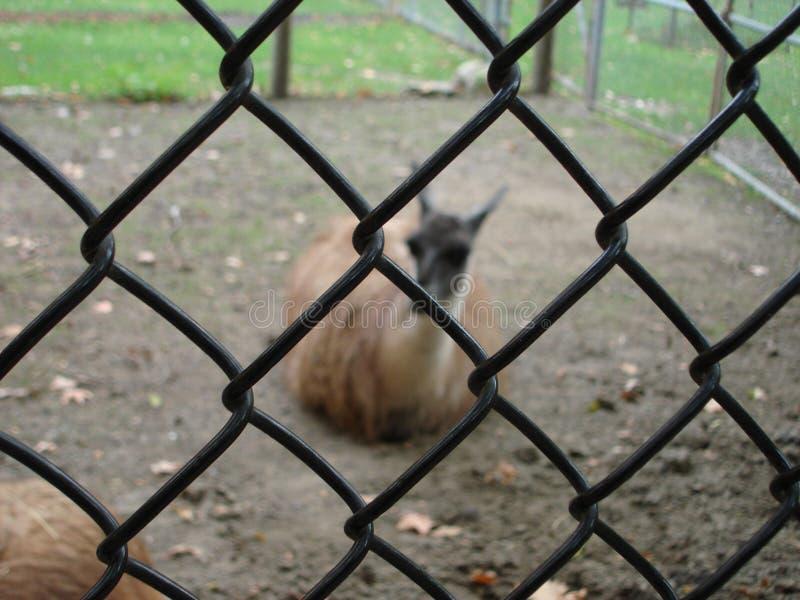 zoo στοκ φωτογραφία