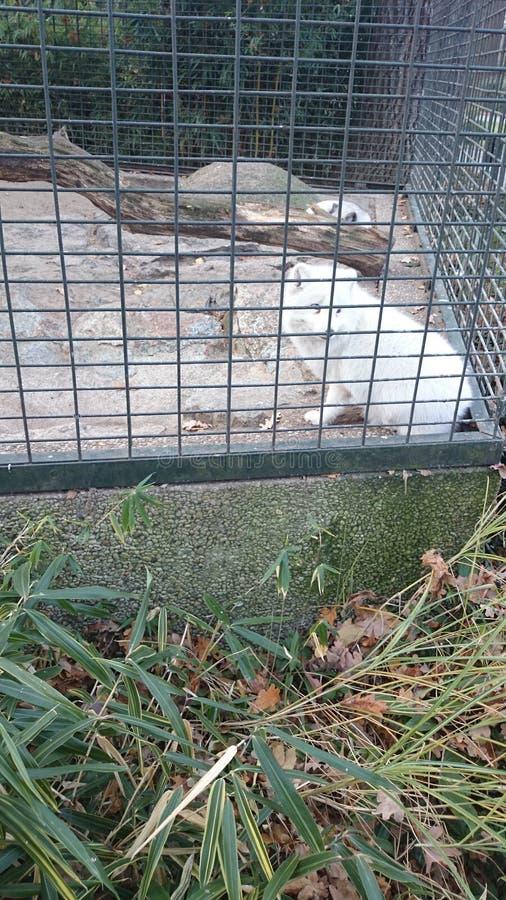 zoo image libre de droits