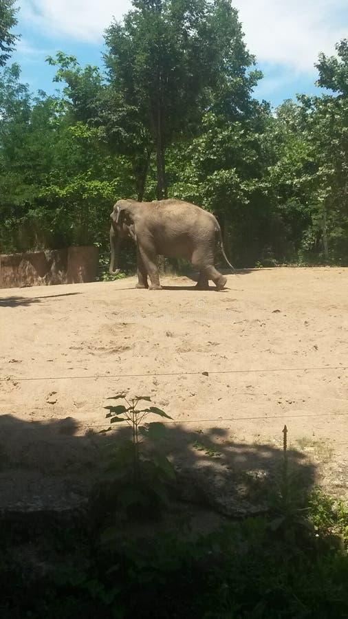 zoo stockbilder