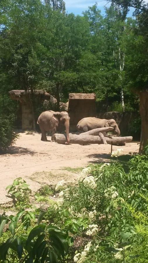 zoo lizenzfreie stockfotos