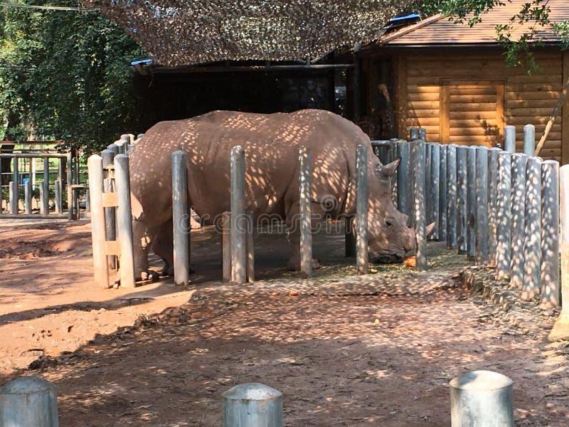 zoo zdjęcie royalty free