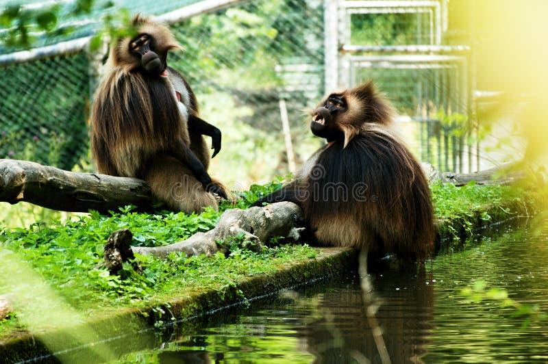 zoo photographie stock