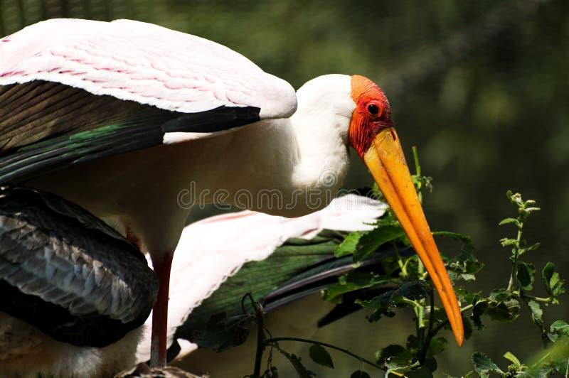 zoo photos libres de droits
