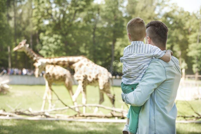zoo foto de archivo libre de regalías