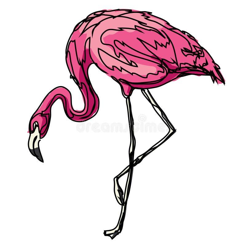 Zoo animale di contorno di rosa dell'uccello del fenicottero fotografia stock libera da diritti