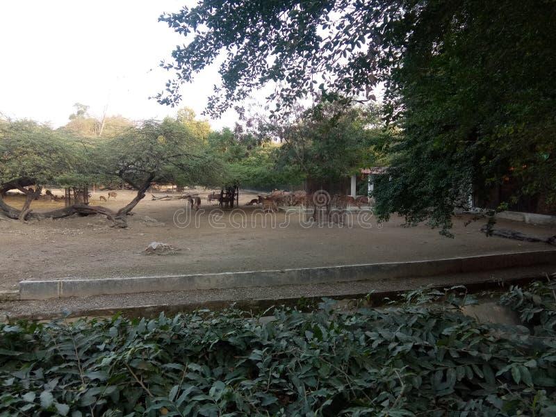 Zoo av delhi det trevliga seende stället arkivfoton