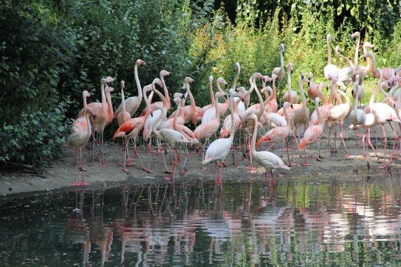 Zoo a Berlino, anno 2013 fotografie stock libere da diritti