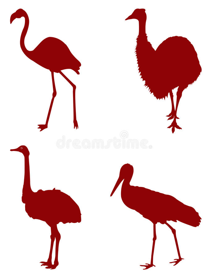 Zoo birds silhouette. Vector file of Zoo birds silhouette royalty free illustration