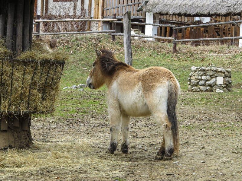 ZOO Brno - centre de faune photos libres de droits