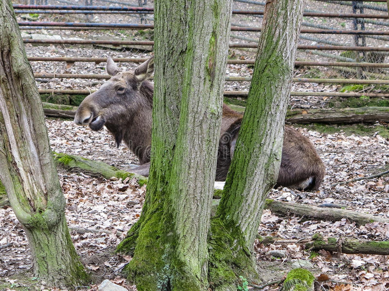 ZOO Brno - centre de faune photographie stock