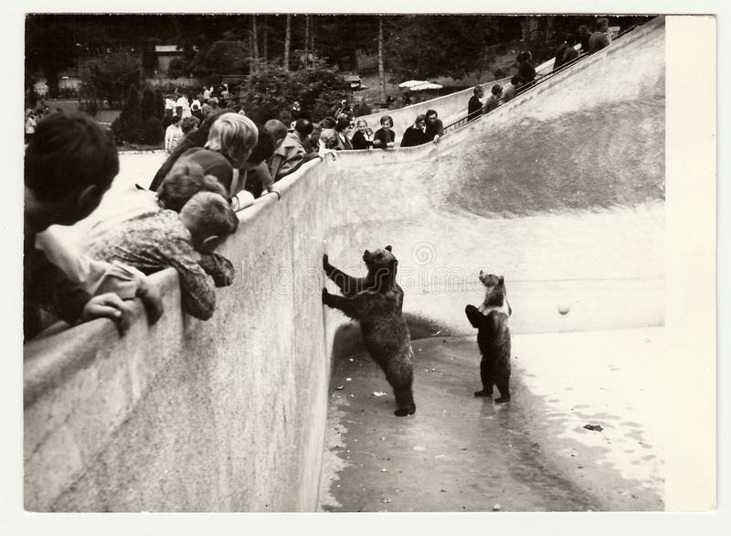ZOO d'annata di visita della gente di manifestazioni della foto Un supporto di due orsi in fossato dell'orso fotografie stock