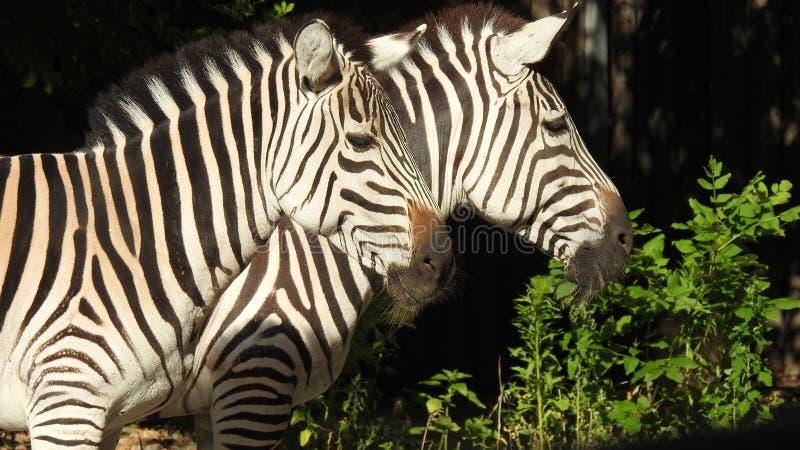 Zoo de Kyiv images libres de droits