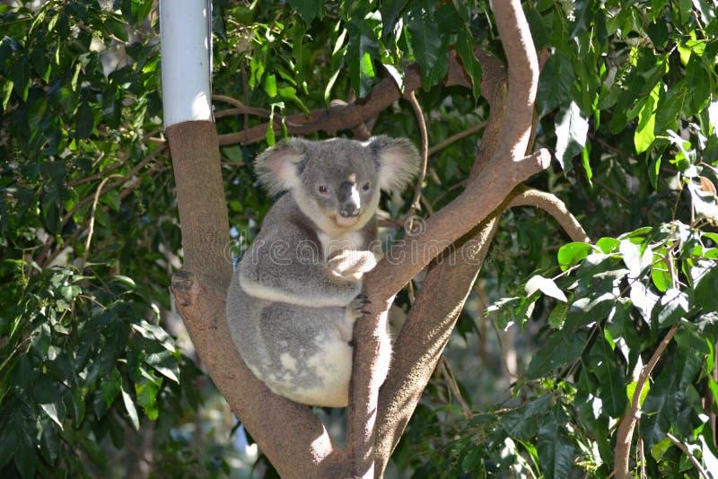 Zoo de la Gold Coast photo libre de droits
