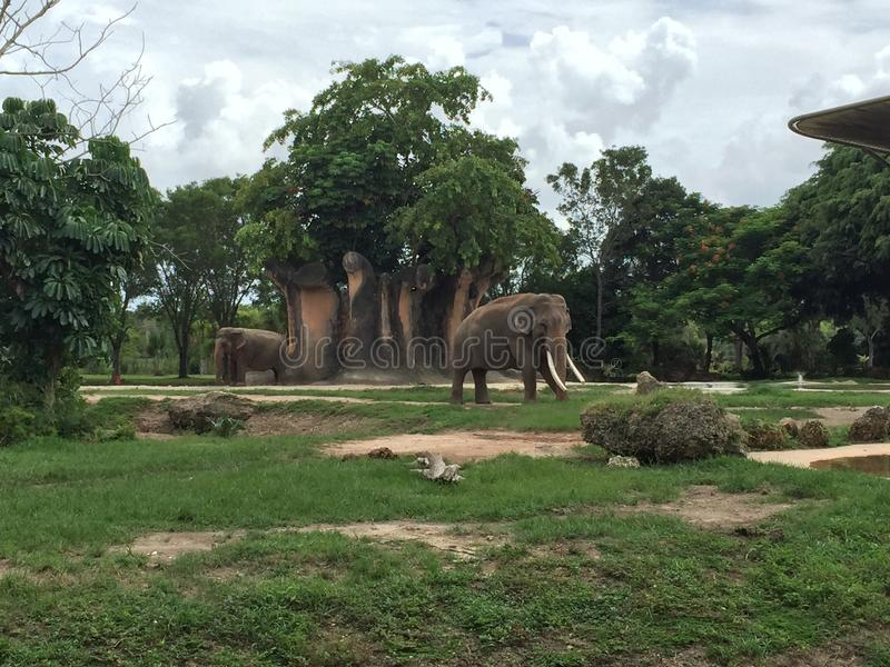 Zoo de Miami photographie stock libre de droits
