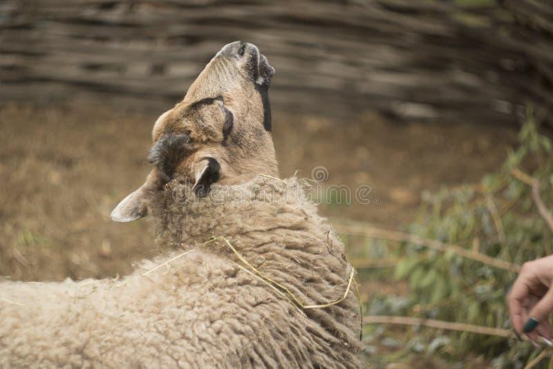Zoo de parc naturel image libre de droits