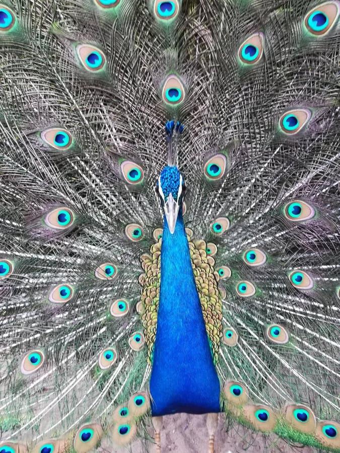 Zoo de Vizag photo libre de droits