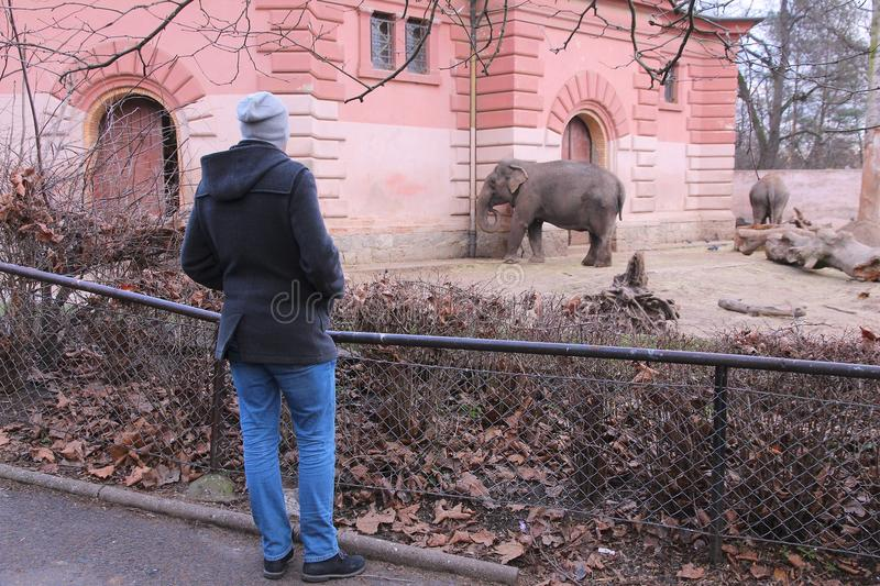Zoo de Wroclaw photos stock