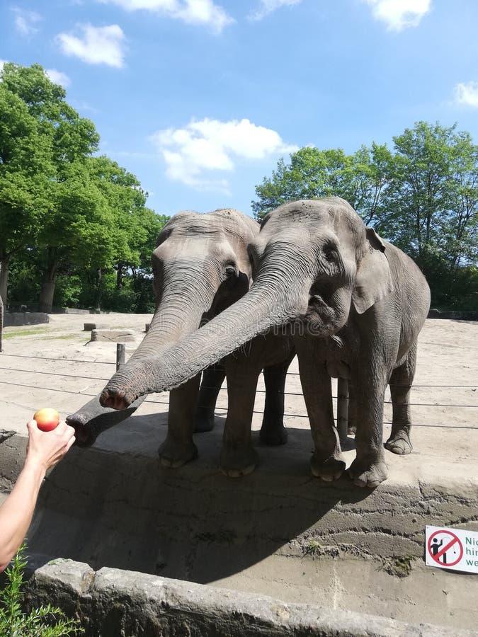 zoo fotografie stock libere da diritti