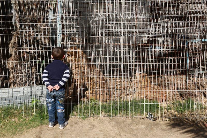 Zoo i Rafah ger besökare en möjlighet att spela med djur i Gazaremsan royaltyfria bilder