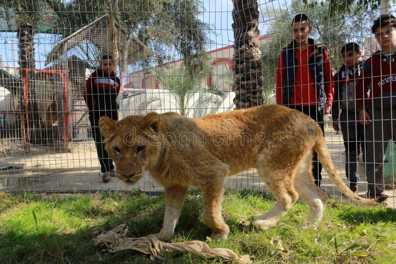 Zoo i Rafah ger besökare en möjlighet att spela med djur i Gazaremsan royaltyfri fotografi