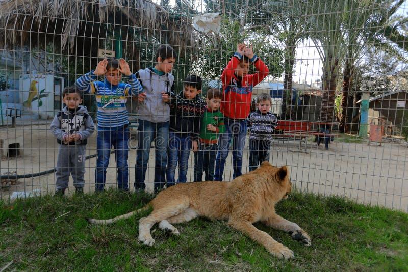 Zoo i Rafah ger besökare en möjlighet att spela med djur i Gazaremsan royaltyfria foton